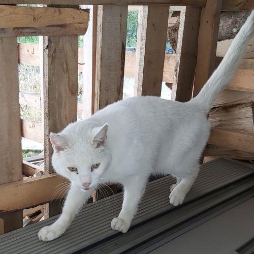 Le Chat De Gouttiere Un Chat Aux Multiples Facettes Animalweb